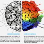 Los hemisferios cerebrales y la Comunicación No Verbal